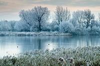 UK, England, Gloucestershire, Cotswold Water Park, winter flood.