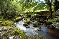 England, Cumbria, Lake District National Park. Aira Beck above Aira Force, a powerful body of water near the shores of Ullswater.