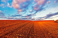 Red ploughed field landscape. Northwest of Guadalajara province. Castille La Mancha. Spain.
