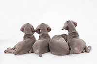 Four puppies' tails