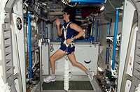 Astronaut exercising on the ISS. NASA astronaut Sunita Williams (born 1965) exercising in a bungee harness on the Combined Operational Load Bearing Ex...