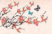 traditional illustration of pink flowers and butterflies