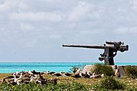 Laysan albatross (Phoebastria immutabilis), nest colony and WWII gun from the Battle of Midway, Eastern Island, Midway Atoll National Wildlife Refuge,...