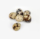 Quail eggs, close-up
