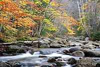 mountain creek in autumn forest of the White Mountains, USA, Maine, Grafton Notch-State Park