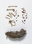 Small animal bones and insect parts found in tawny owl pellet