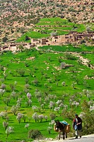 Ourika valley - Almond trees - Morocco