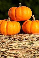 Close-up of pumpkins on straw.