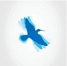 Birdie3