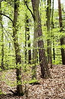 Green forest with fresh leaves in Poznan, Poland