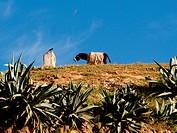 Tanner, Fez, Morocco, Africa / Gerber, Fes, Marokko, Afrika
