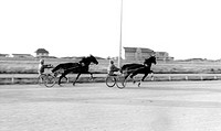 Prestatyn, Pony Trotting Racing c1965