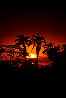 Palm trees silhouetted at sunset, Samburu National Park, Kenya