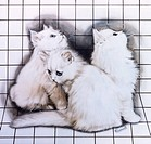Three cute white kittens on a bold white background, covered with a grid of thin black lines. Painting by Malcolm Greensmith
