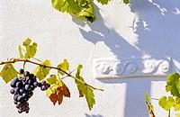 Vine brnach and grapevine