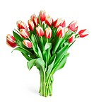 big bouquet of red tulips isolated on white