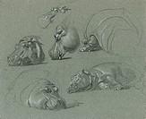 Hippo Studies