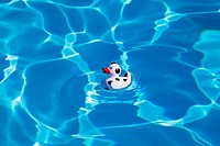 Italy, swimming pool, floating football duck
