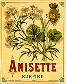Label design for anisette liqueur, also known as anis -- a drink tasting like licorice, extracted from the aniseed plant.