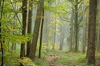 Landscape of a little trail going through the forest in autumn, Upper Palatinate, Bavaria, Germany