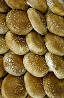 Full Frame of Chinese Mushroom