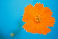 plant,flower