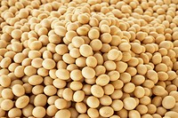 Heap of soybeans, close up, full frame