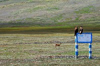 Eagles and antelope