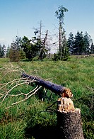 Dead tree trunk, High Fens Natural Reserve (Reserve Naturelle des Hautes Fagnes), Ardennes, Belgium.