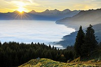 Sunrise over Sea of C??louds in the Mountains, Gurnigel, Alps, Berne, Switzerland