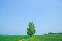 Green Field Beneath Blue Sky With Single Tree, Kamikawa Subprefecture, Hokkaido, Japan