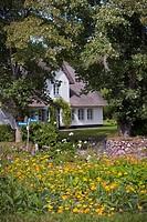 Summer garden in Westerland / Sylt - Keitum/Sylt, Schleswig-Holstein, Germany, 28/07/2009