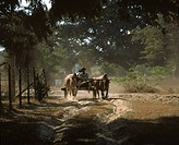 Oxen pulling a wagon, South East Asia