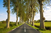 Tree Lined Road, Near Montagnac, Languedoc-Roussillon, France.