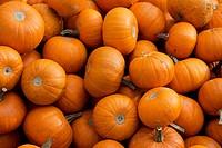 Close up of a pile of small pumpkins; Brixlegg, Austria