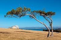 coastal landscape with bended trees and house, Maria Island, Tasmania, Australia.