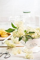 Colander of elderflowers, Sambucus nigra, and scissors on wooden table