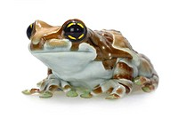Amazonian canopy frog (Phrynohyas resinifictrix), front view of a single animal
