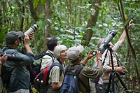 Ecotourists photographing, and digiscoping, birds amongst cloud forest vegetation. Savegre. Costa Rica.