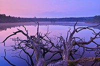 Lake Rothenbachteich at Dawn, Bermuthshain, Grebenhain, Vogelsberg District, Hesse, Germany