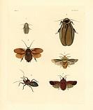 Banana cockroach, Panchlora nivea 1, Central American giant cockroach, Blaberus giganteus 2, Egyptian desert cockroach, Polyphaga aegyptiaca?, spined ...