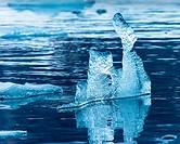 Floating ice pieces, Hornsund, Spitsbergen, Norwa