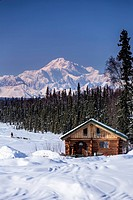 Dog musher Martin Buser runs his team during a spring training run on a lake with Mt. Mckinley and Alaska Range in the background and log cabin in for...