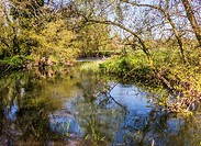Quite Pools On The River Lodden Berkshire UK