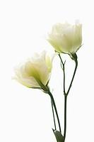 A flower template