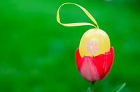 Easter egg inside red tulip in the garden