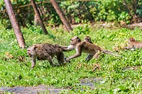 Monkey mother and its baby escaping