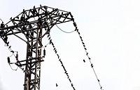 pylon with birds, Valencia