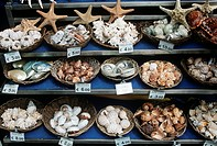 Close up of seashells for sale in Venetian shop