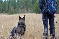 Dog and person looking in field, Lake Tahoe, California, USA.